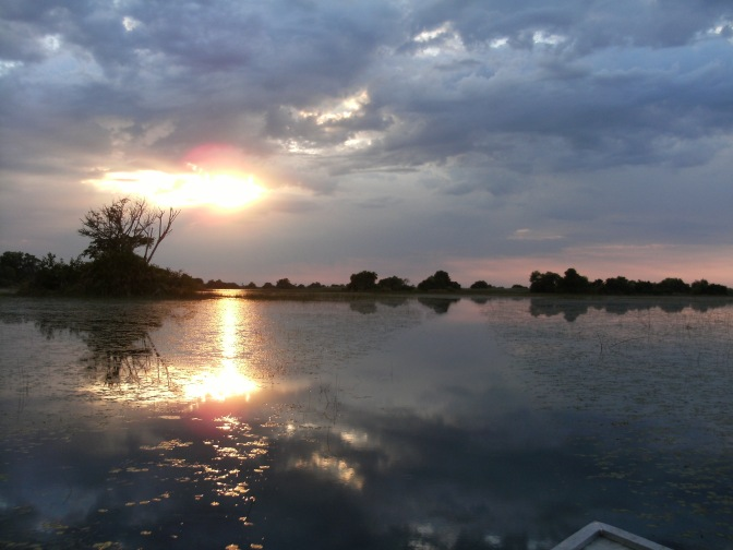 On Safari In The Okavango Delta, Botswana