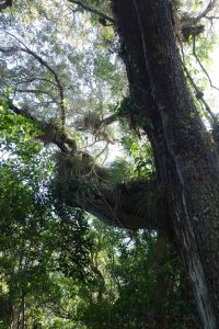 Hammock Vegetation Florida