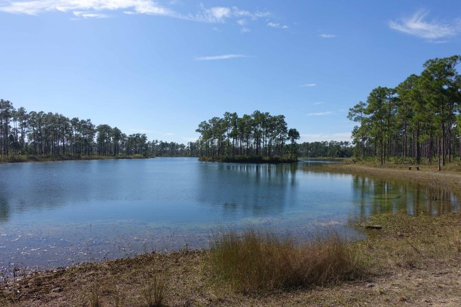 The Everglades National Park, Florida, USA
