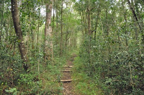 Goudveld State Forest Indigenous forest walk
