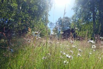 Swedish Summer Meadow